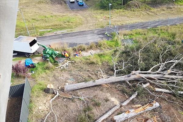 optimum tree service removal nsw central coast (2)