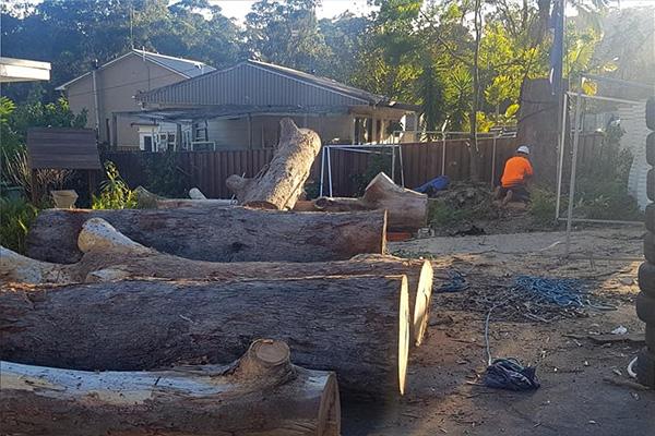 optimum tree service removal nsw central coast (4)