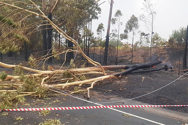 optimum tree service removal nsw central coast (5)