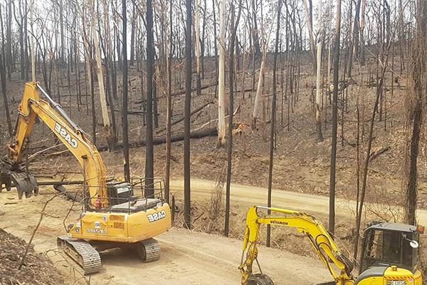 optimum tree service removal nsw central coast (6)
